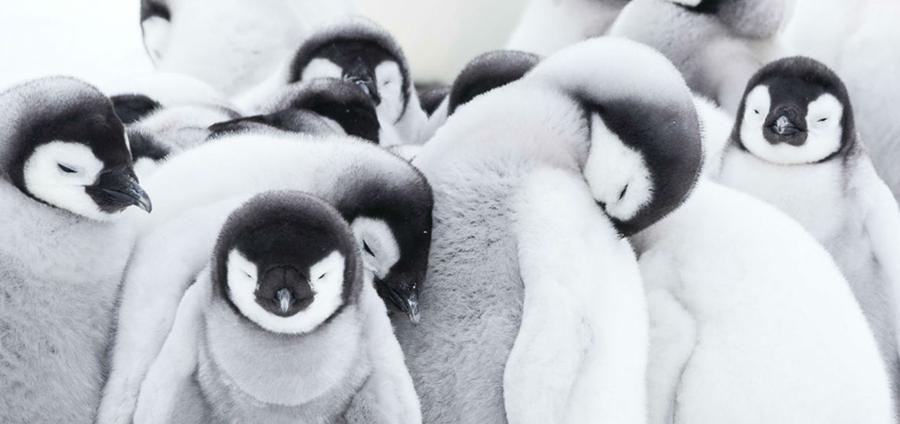 La Marcha de los Pingüinos 2